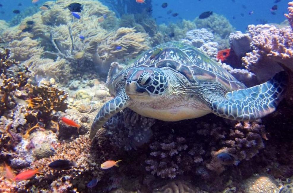 Become a Scuba Diver - Travel More