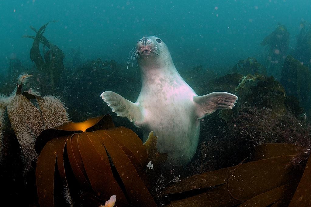 Become a Scuba Diver - Seal