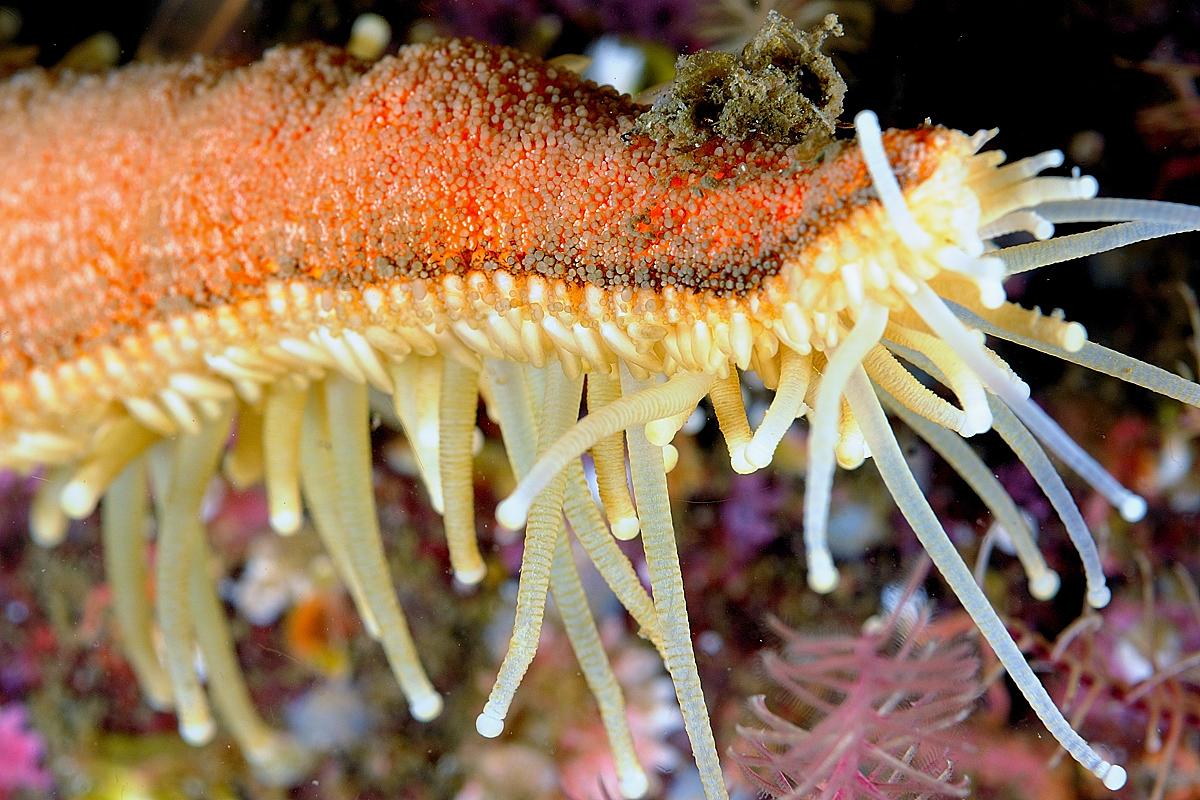 Scotland - Starfish